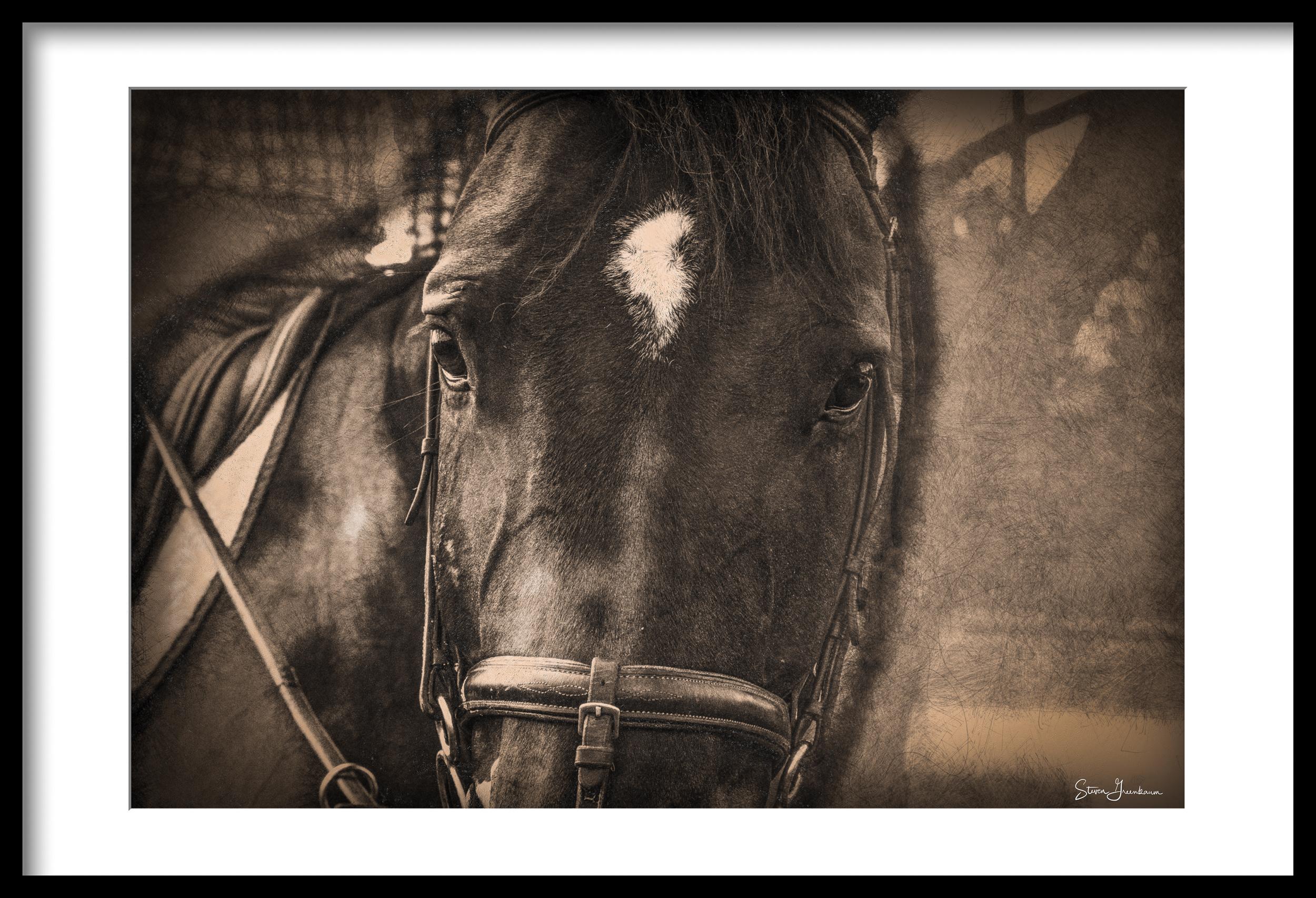 20160815_horses_0260-Edit.jpg