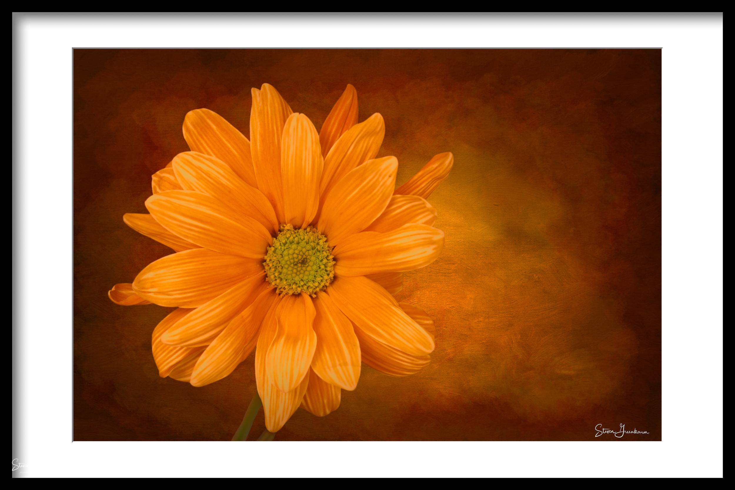 20140207_flowers_0018.jpg