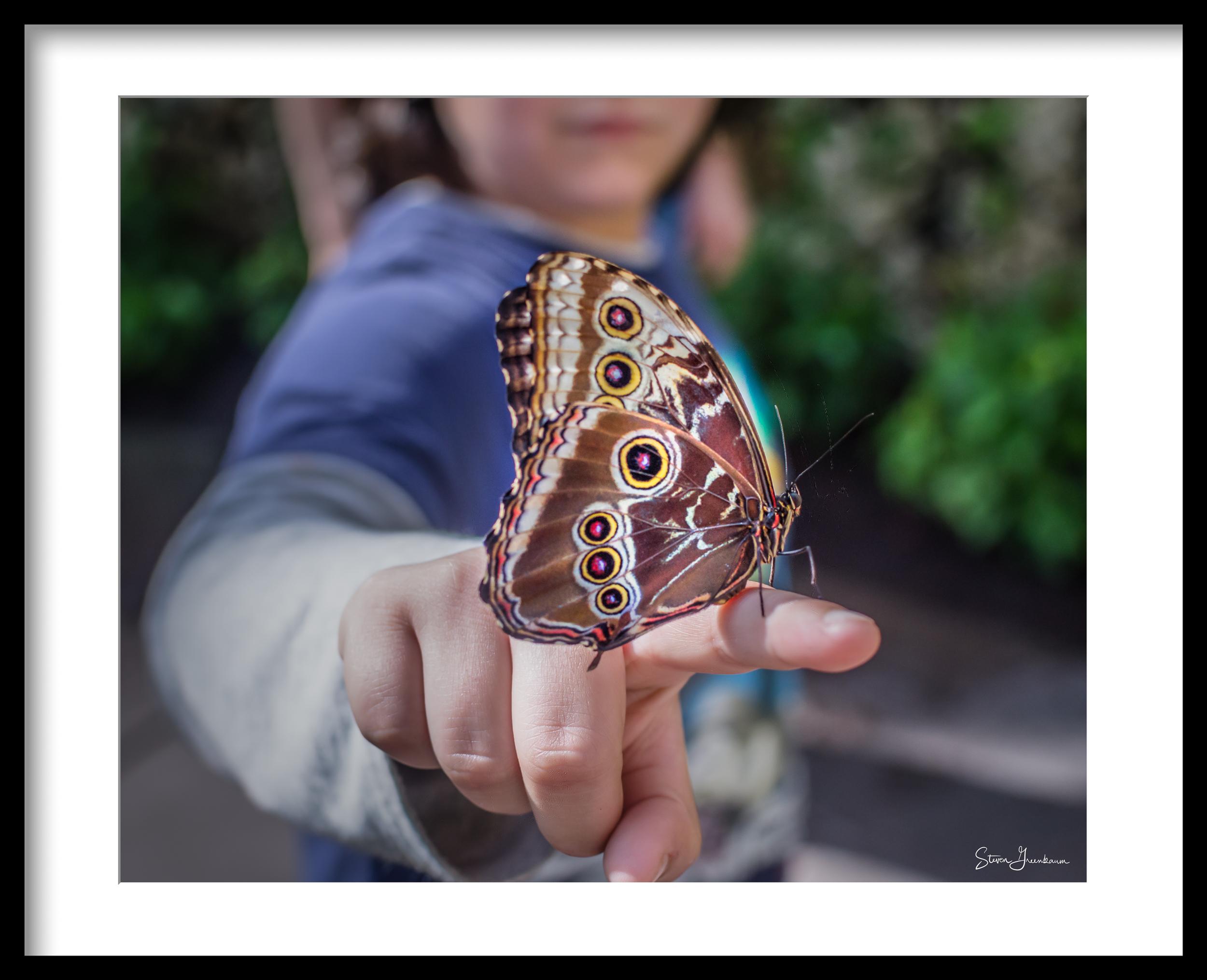 Blue Morpho Butterfly, Fairchild 2013  https://www.rainforest-alliance.org/species/blue-butterfly