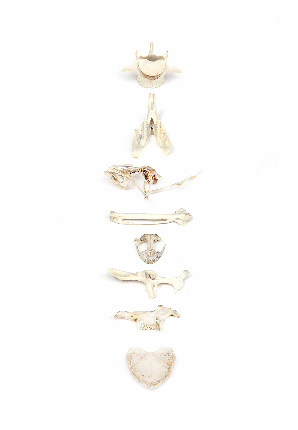 bone-collection-2.jpg