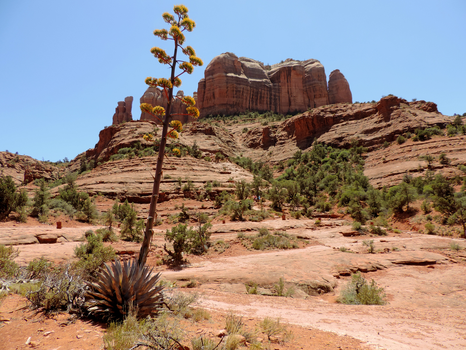 Cathedral Rock on a hot afternoon with a beautiful agave in bloom in the foreground.