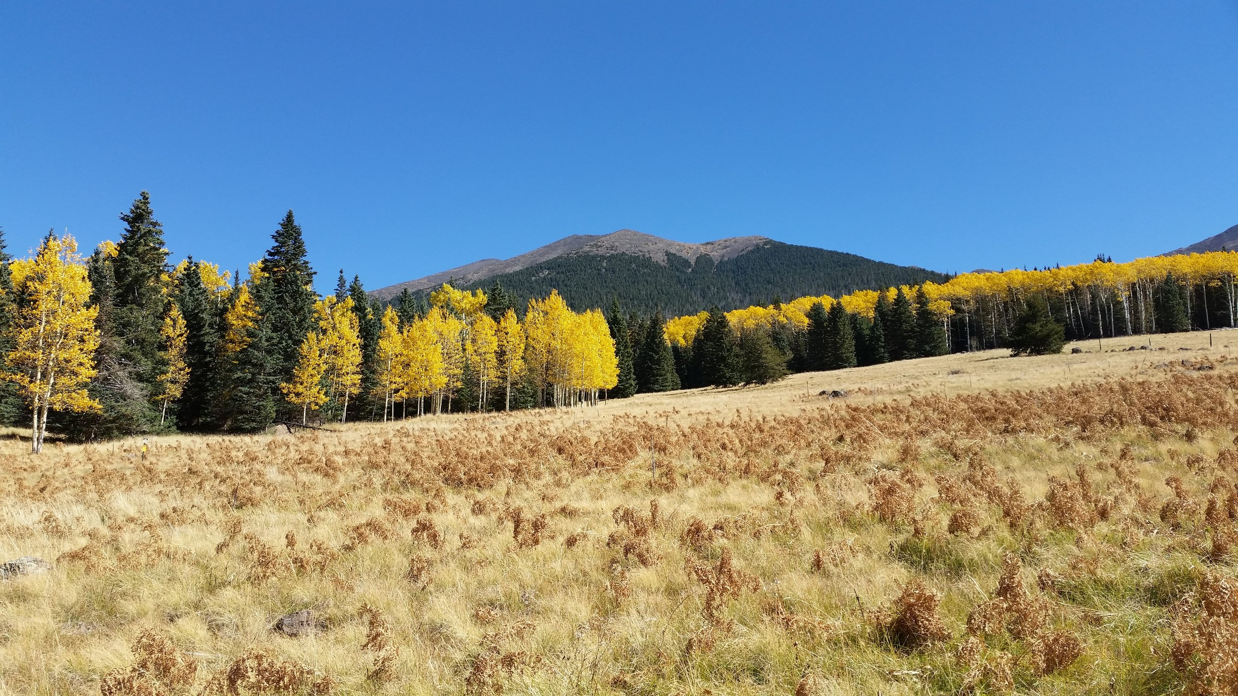 The 12,633' San Francisco Peaks seen from the west at the Arizona Snowbowl.