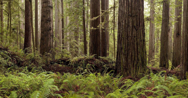 JS_Redwoods_7823.jpg