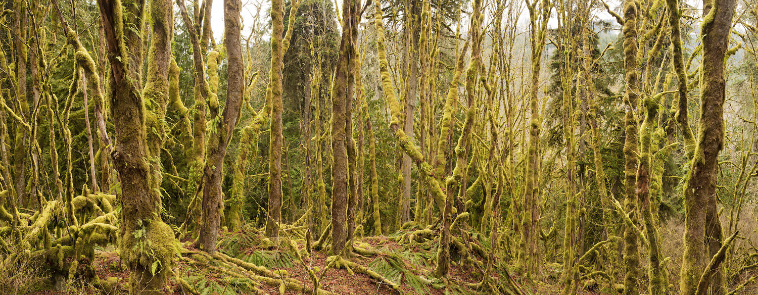 542_Forest_Pano-2740.jpg