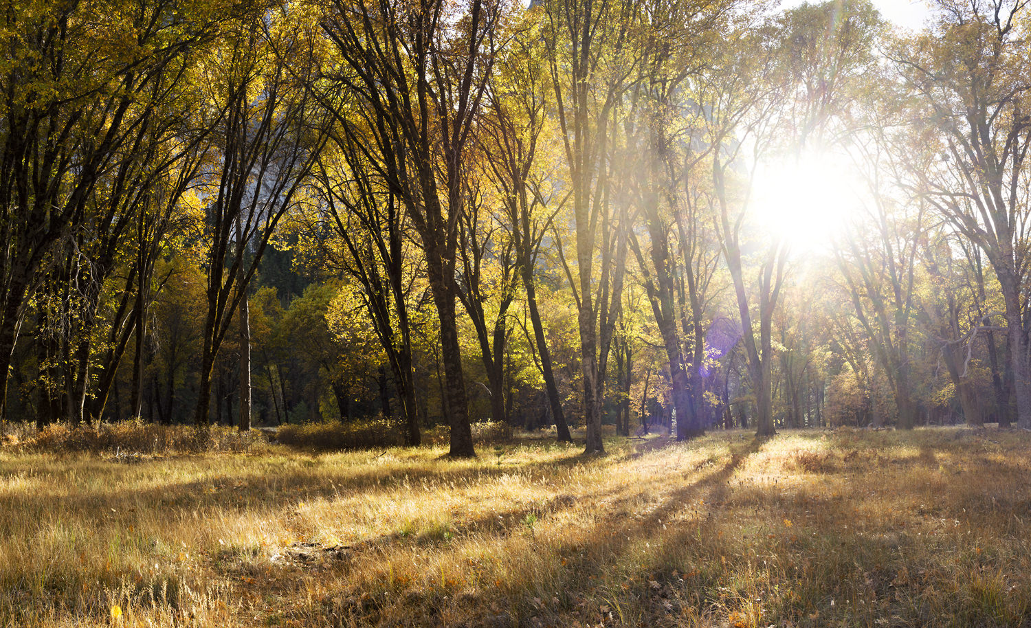 El_Capitan_Meadow_Autumn-5629.jpg