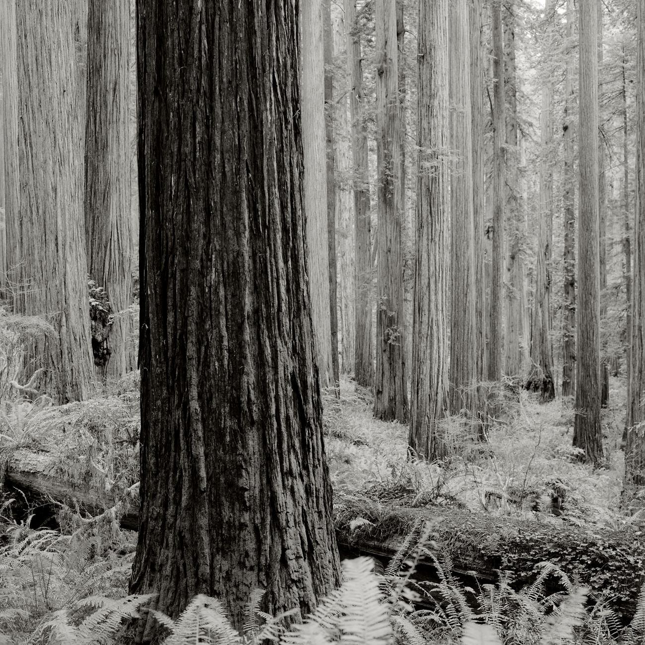 JS_Redwood_004.jpg