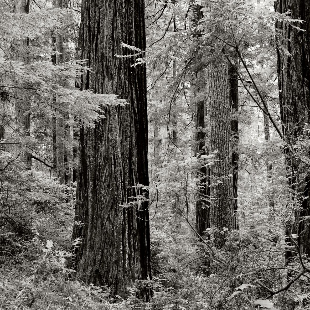 JS_Redwood_005.jpg
