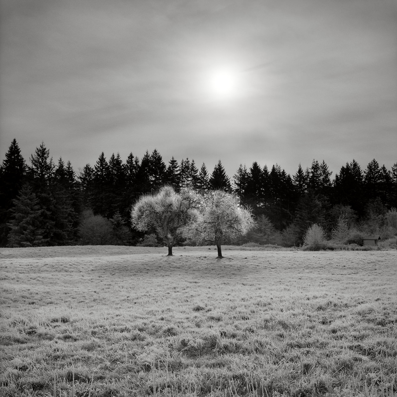 Two_Trees_Bham_05010.jpg