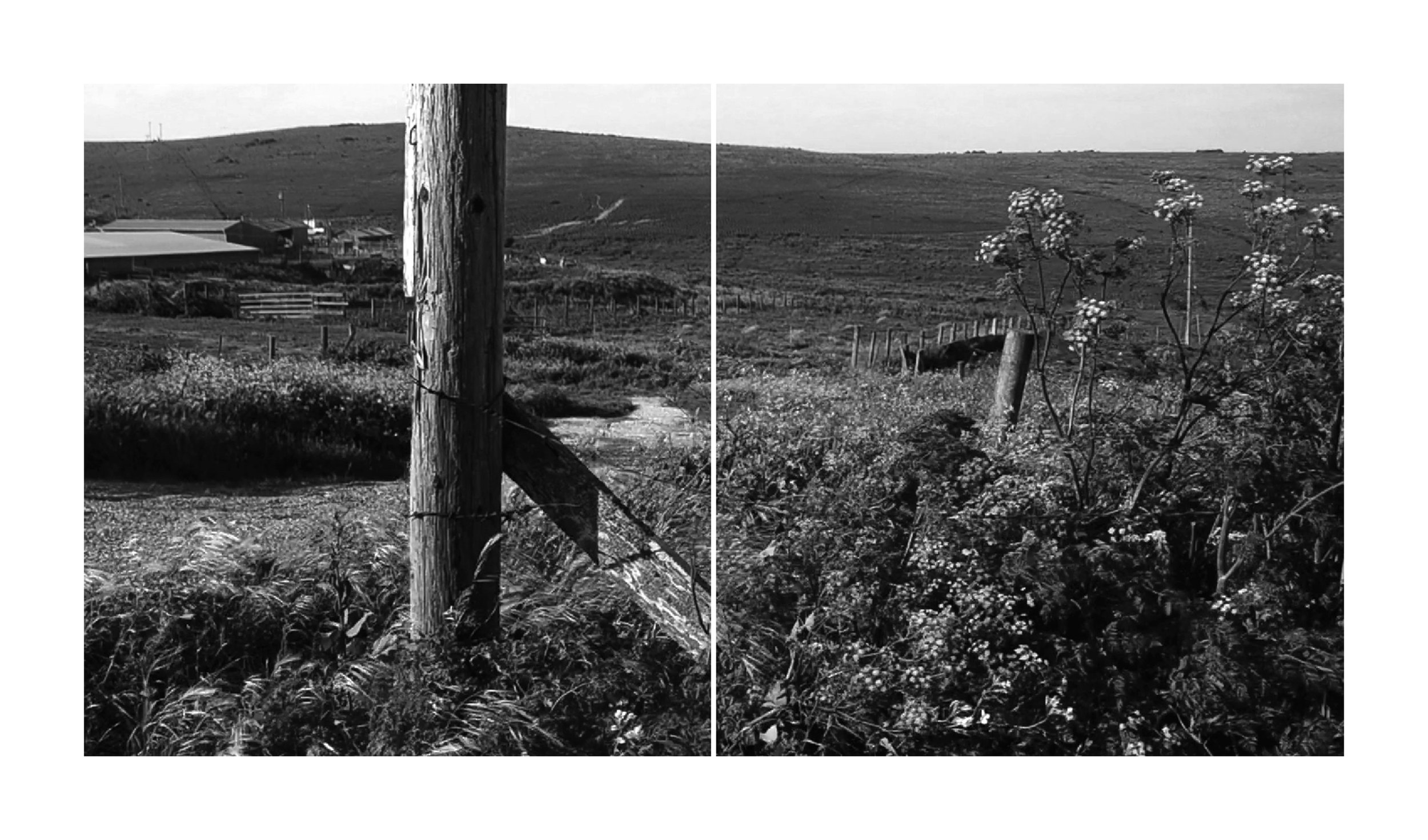 Point Reyes Ranch and Fence