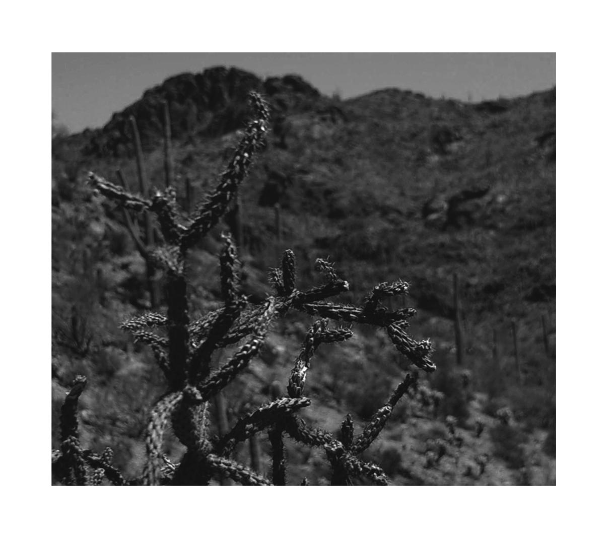 Tucson Mountain Park Cactus