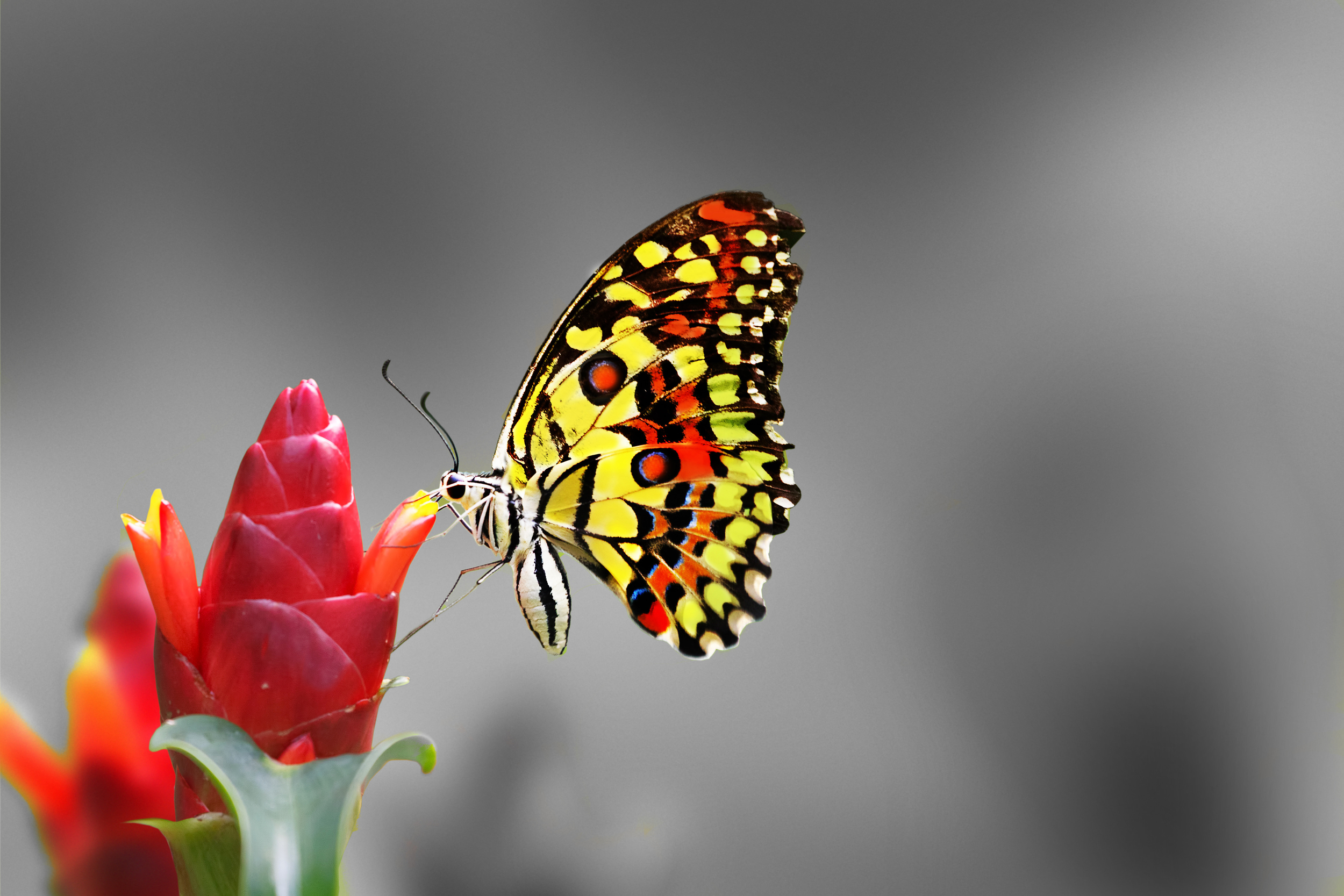 butterflyeat2.jpg