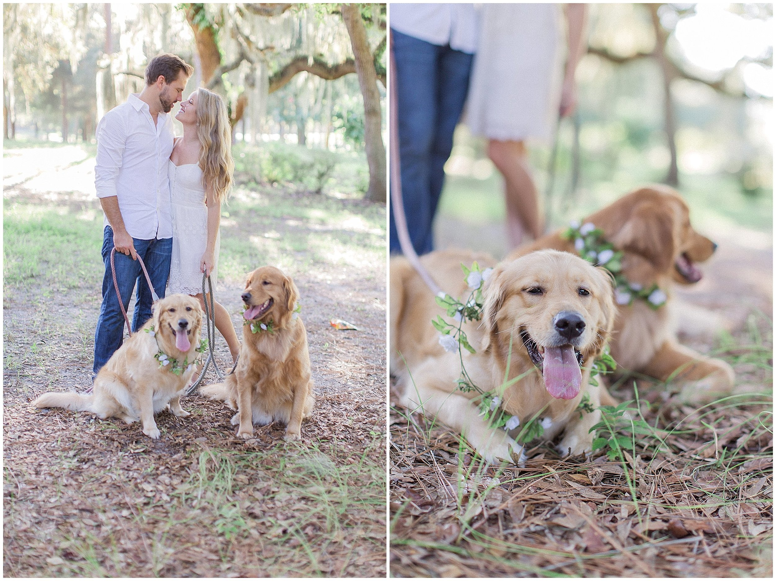 Two Goldens Puppy Engagement Session by PSJ Photography