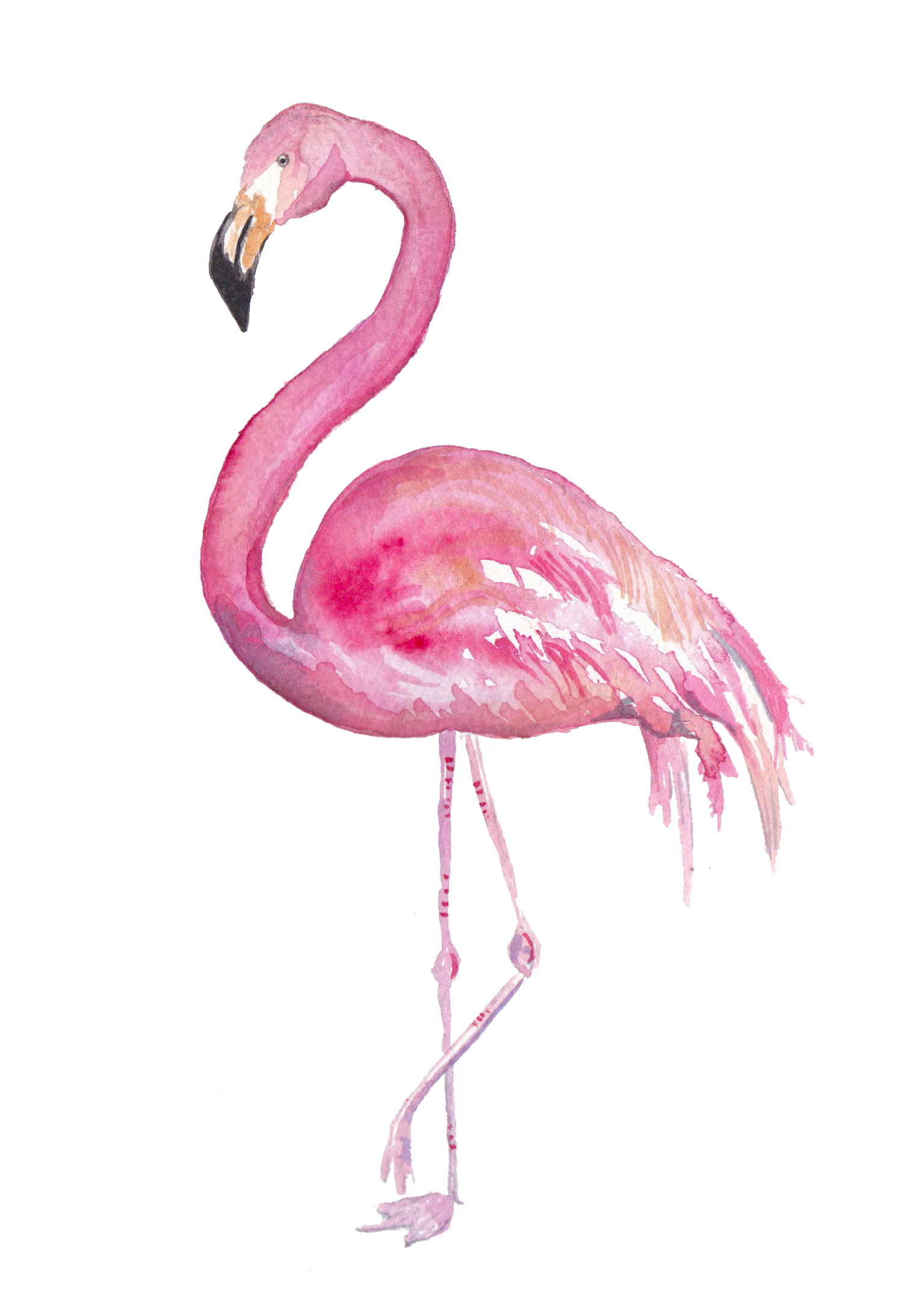 flamingoFINAL.png