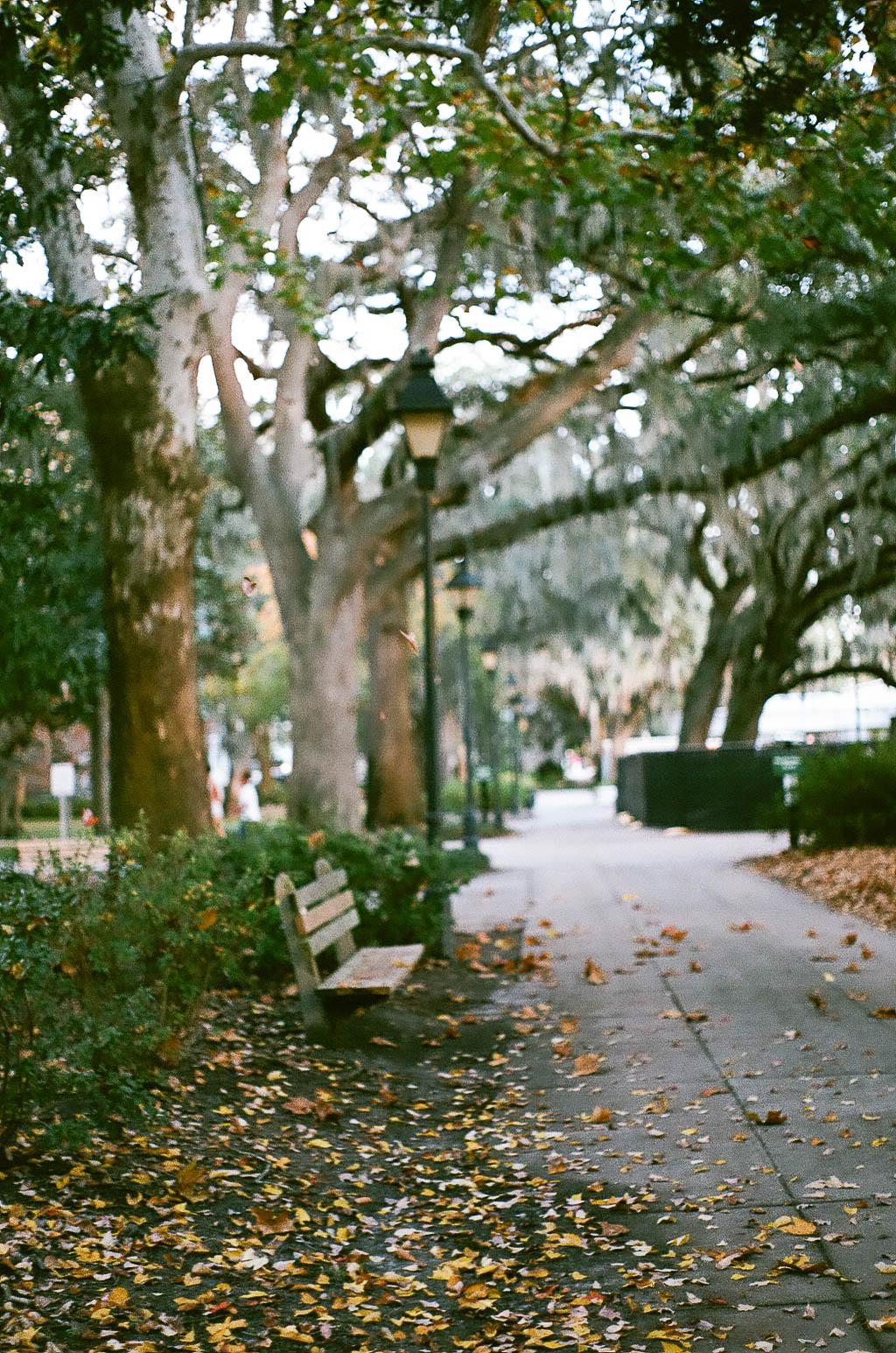 Savannah-5.jpg