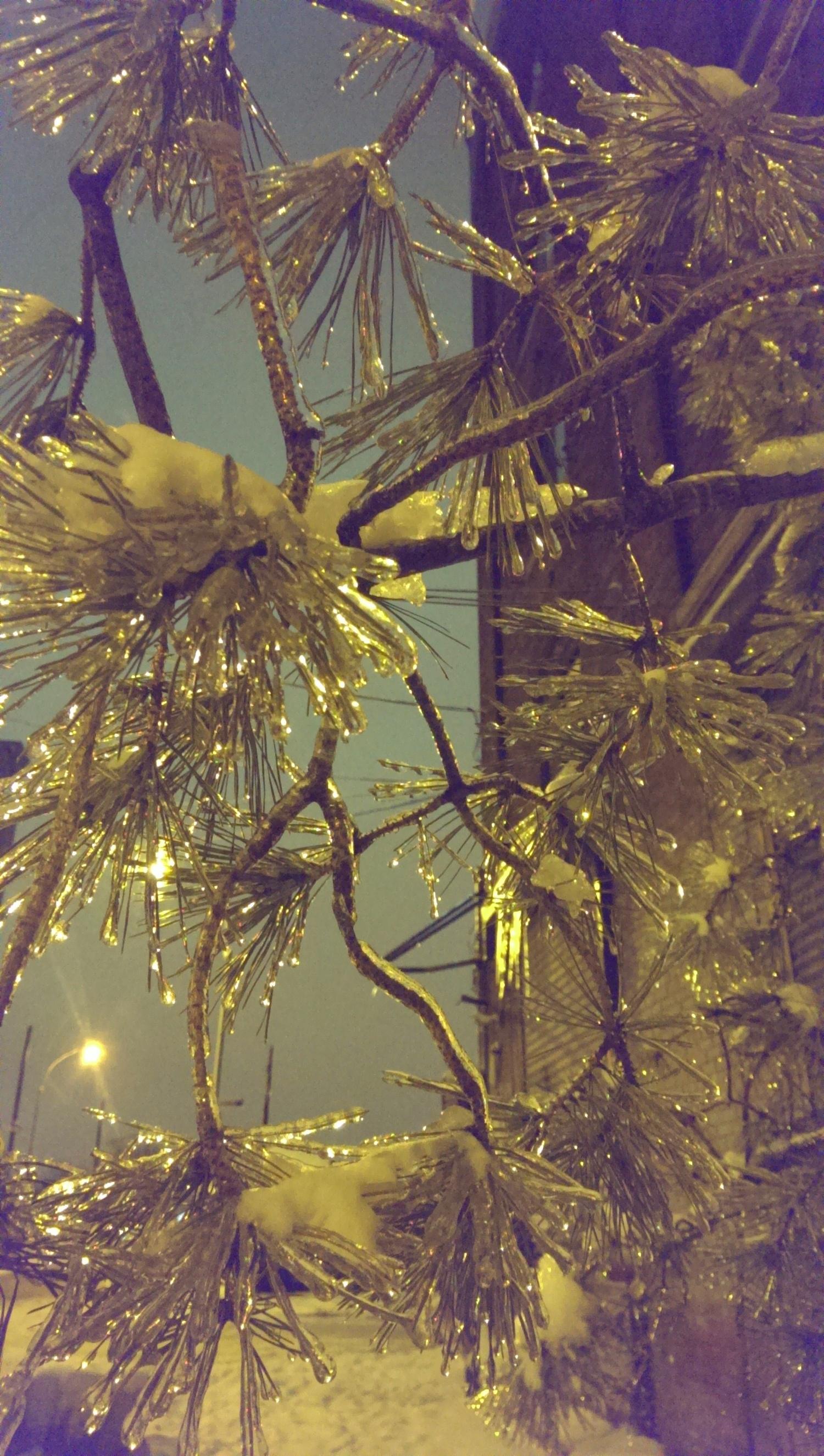 frozen to stillness.