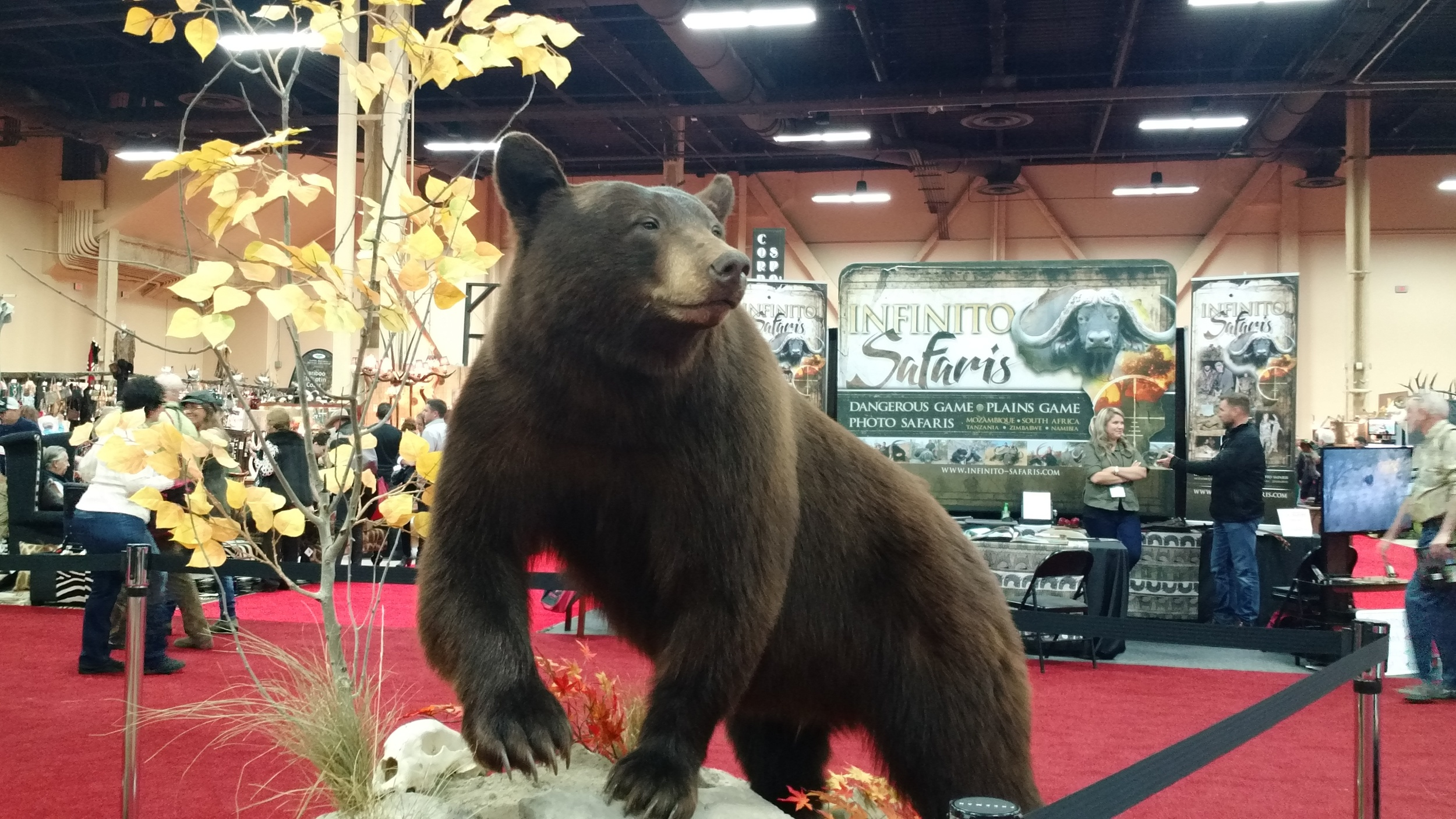DAY 2 TRADESHOW TAXIDERMY BLACK BEAR