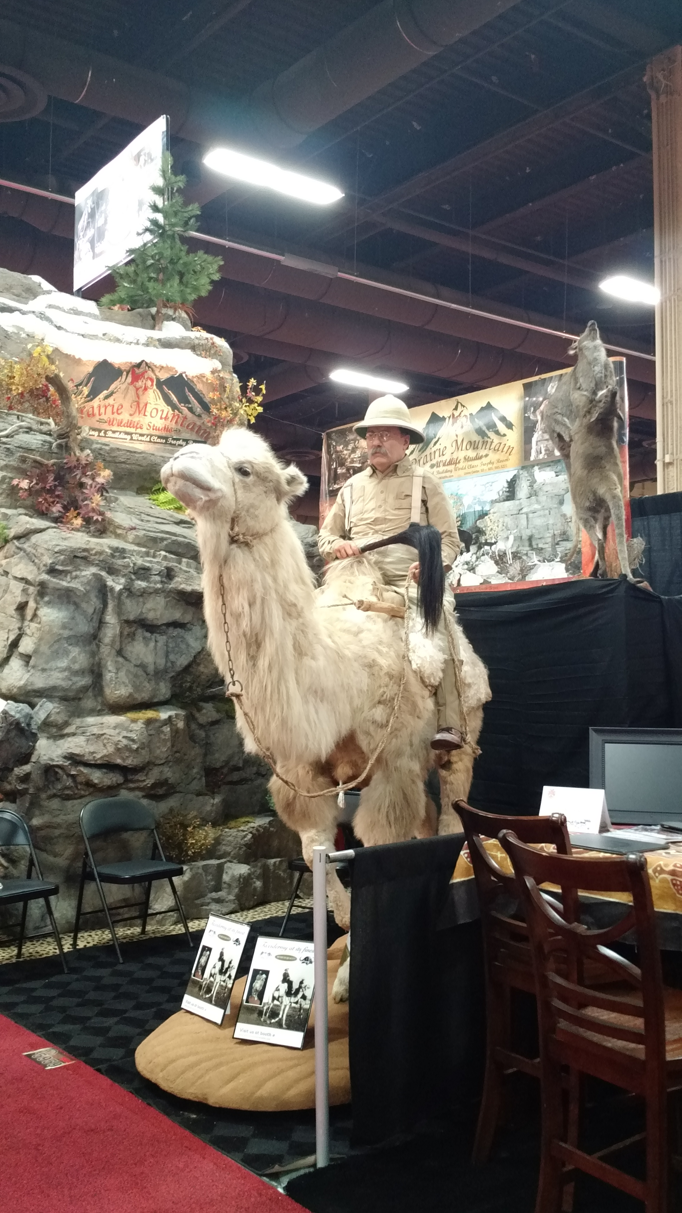 DAY 2 TRADESHOW TAXIDERMY CAMEL ROOSEVELT