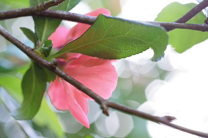 IMG_7490-pinks.jpg