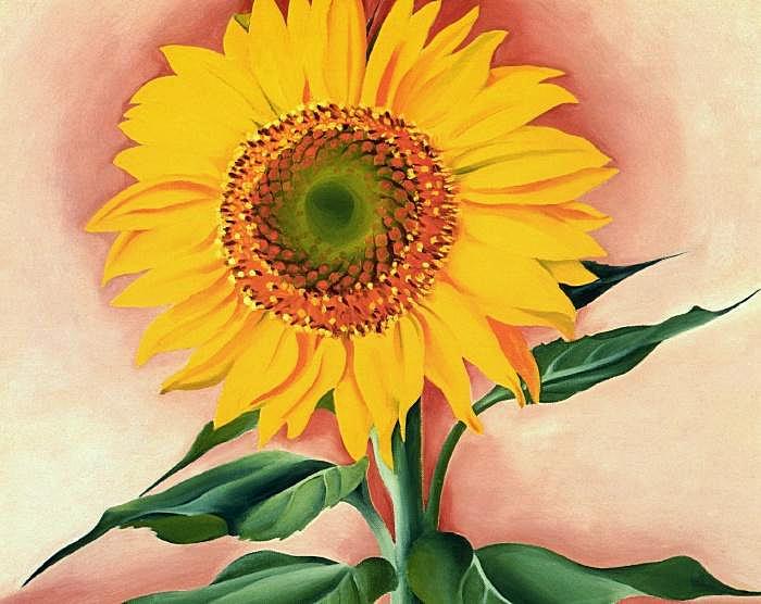 Sunflower from Maggie