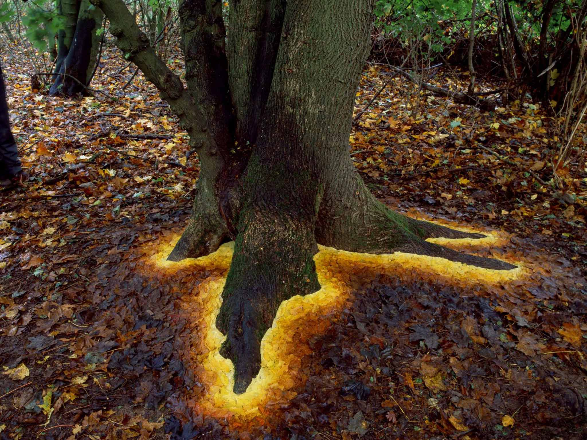 Andy Goldsworthy - sycamore