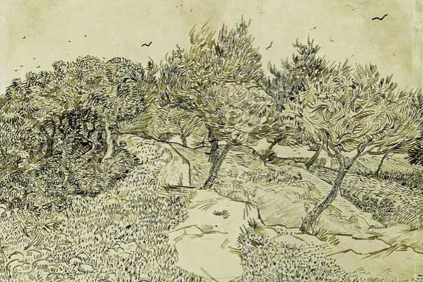 Olive Trees, Montmajour