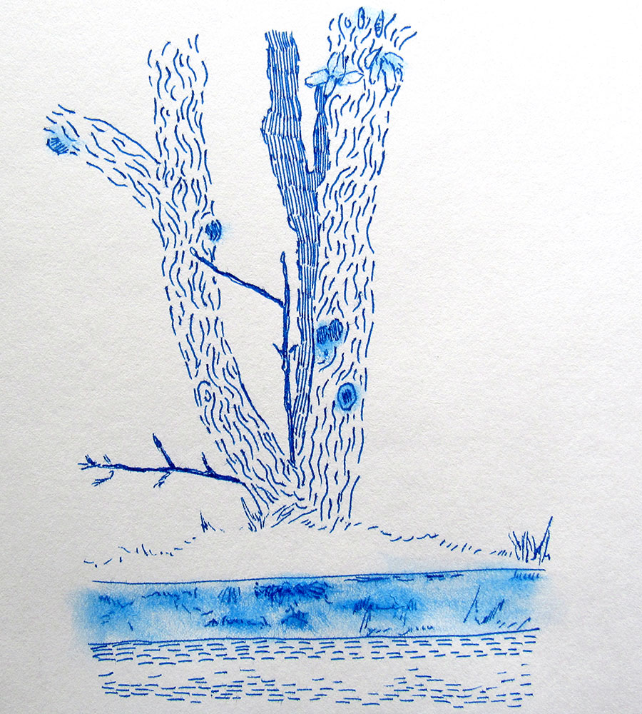 86 - Tree over a Cliff