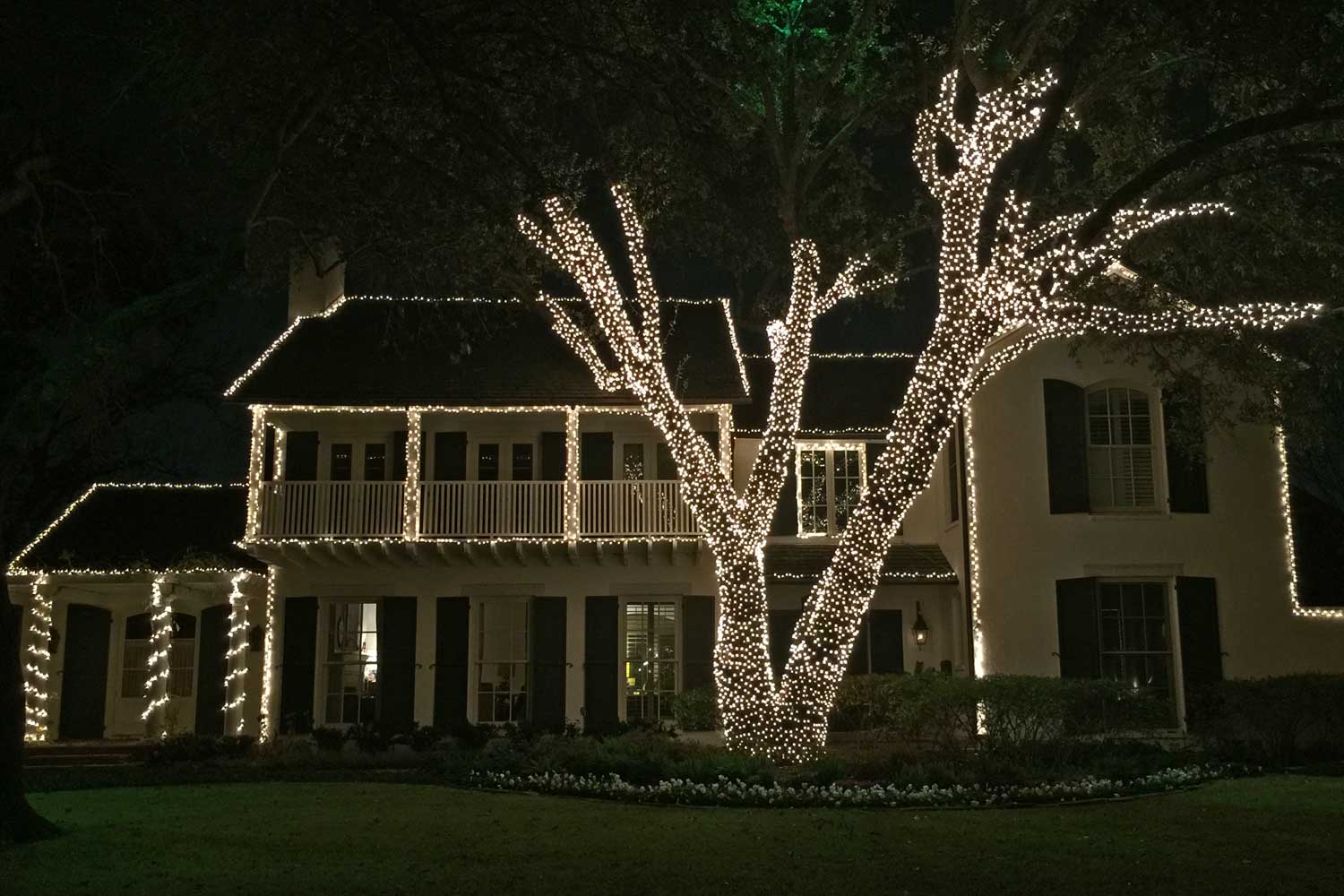 An all white light display and beautiful Live Oak tree wrapped with lights. (Marquette Street in University Park)