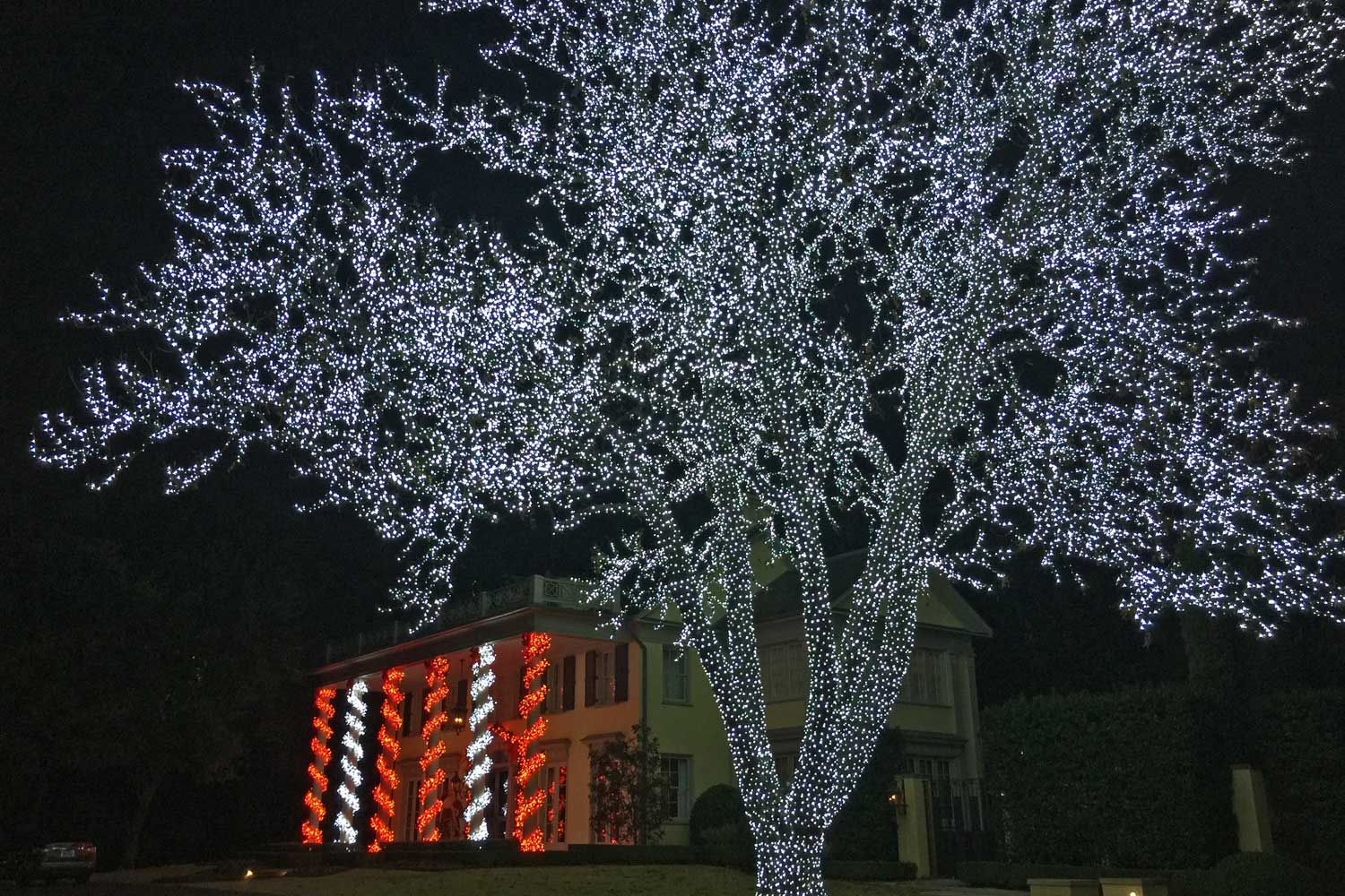 One of the many spectacular trees illuminated on Beverly Drive in Highland Park.