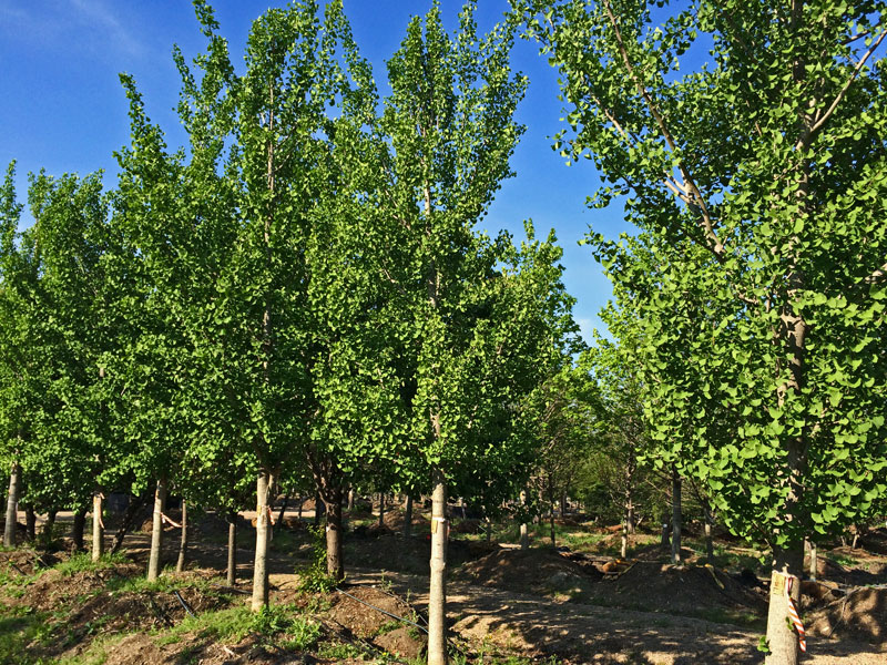 Visit a local nursery to find tree to add to your property. Here's a tip....Plant the biggest tree you can afford. Buy time.