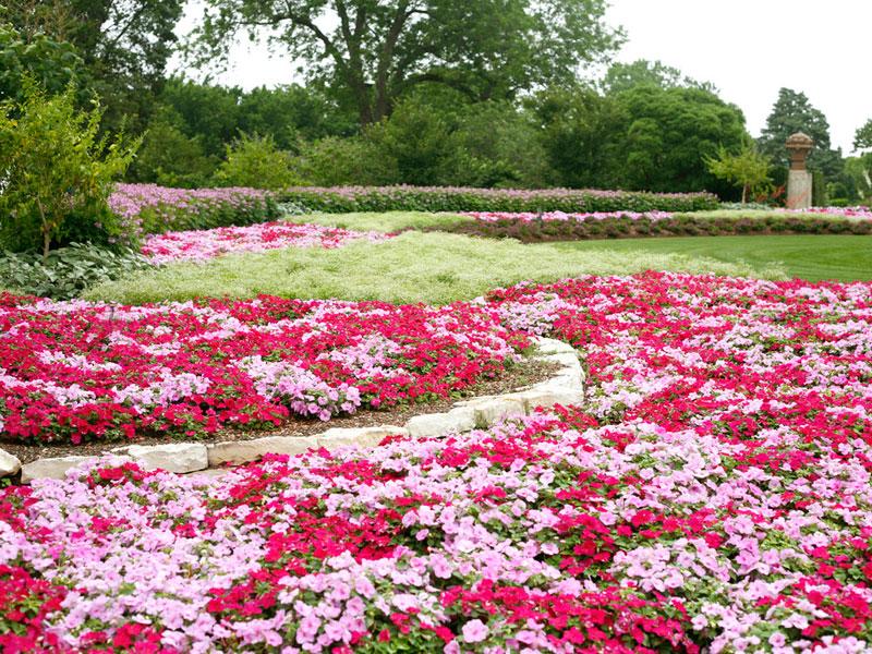 dallas arboretum in the summer