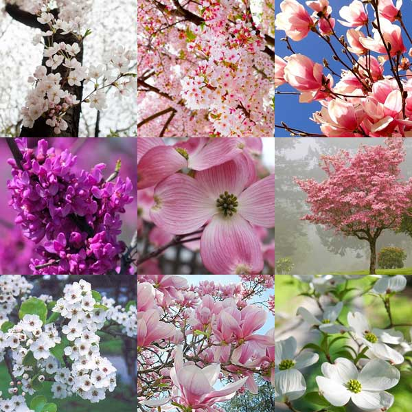 pinterest board - best trees for spring blooms