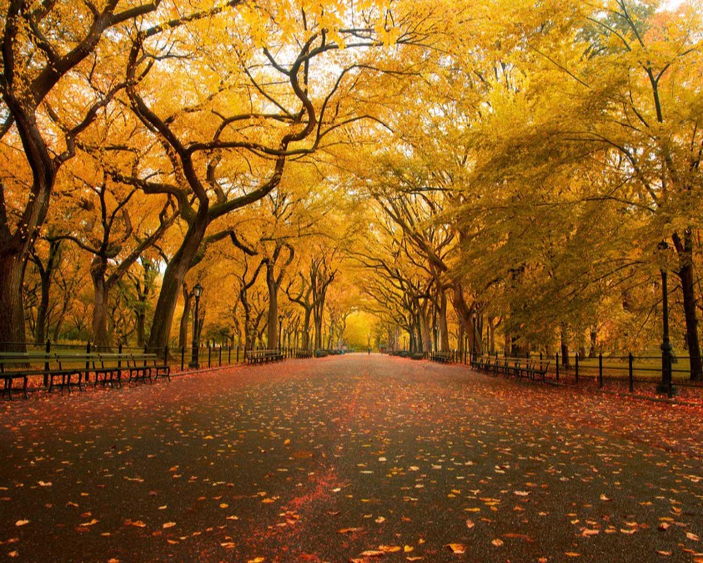 American Elm new York City (Via Flickr - Chris Ford)