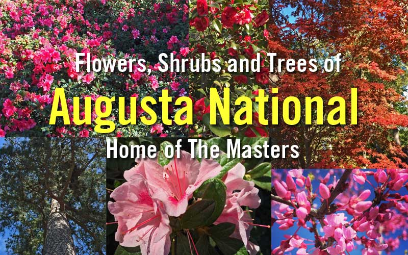 flowers shrubs and trees of augusta national