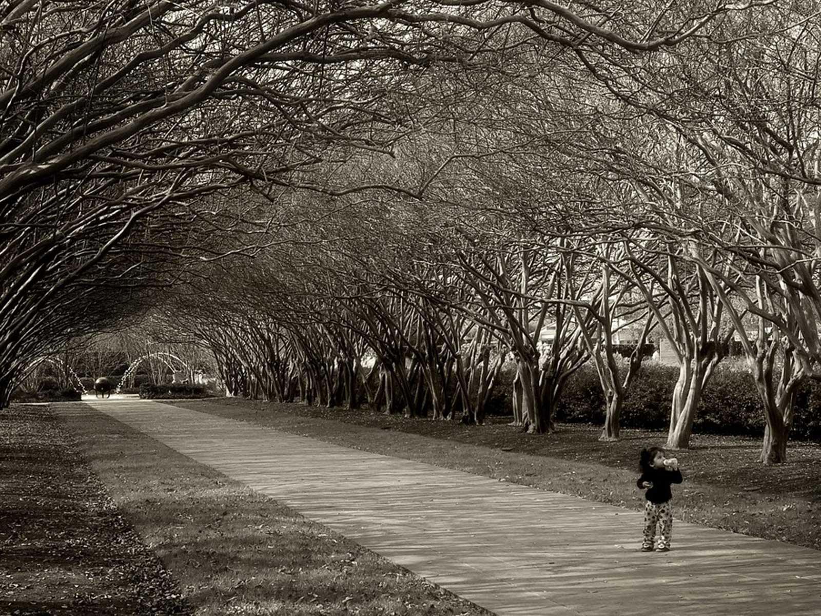 The Crape Myrtle Allee at the Dallas Arboretum -   via Gayle Nicholson