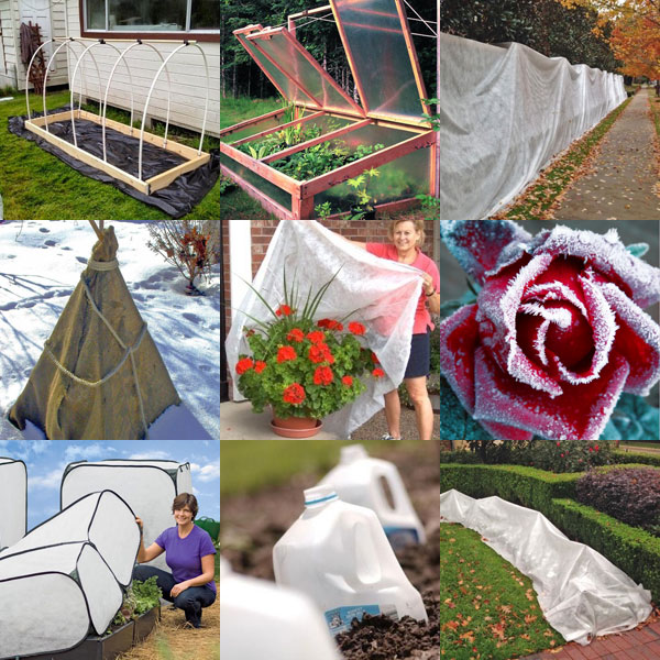 frost-protection-pinterest-board