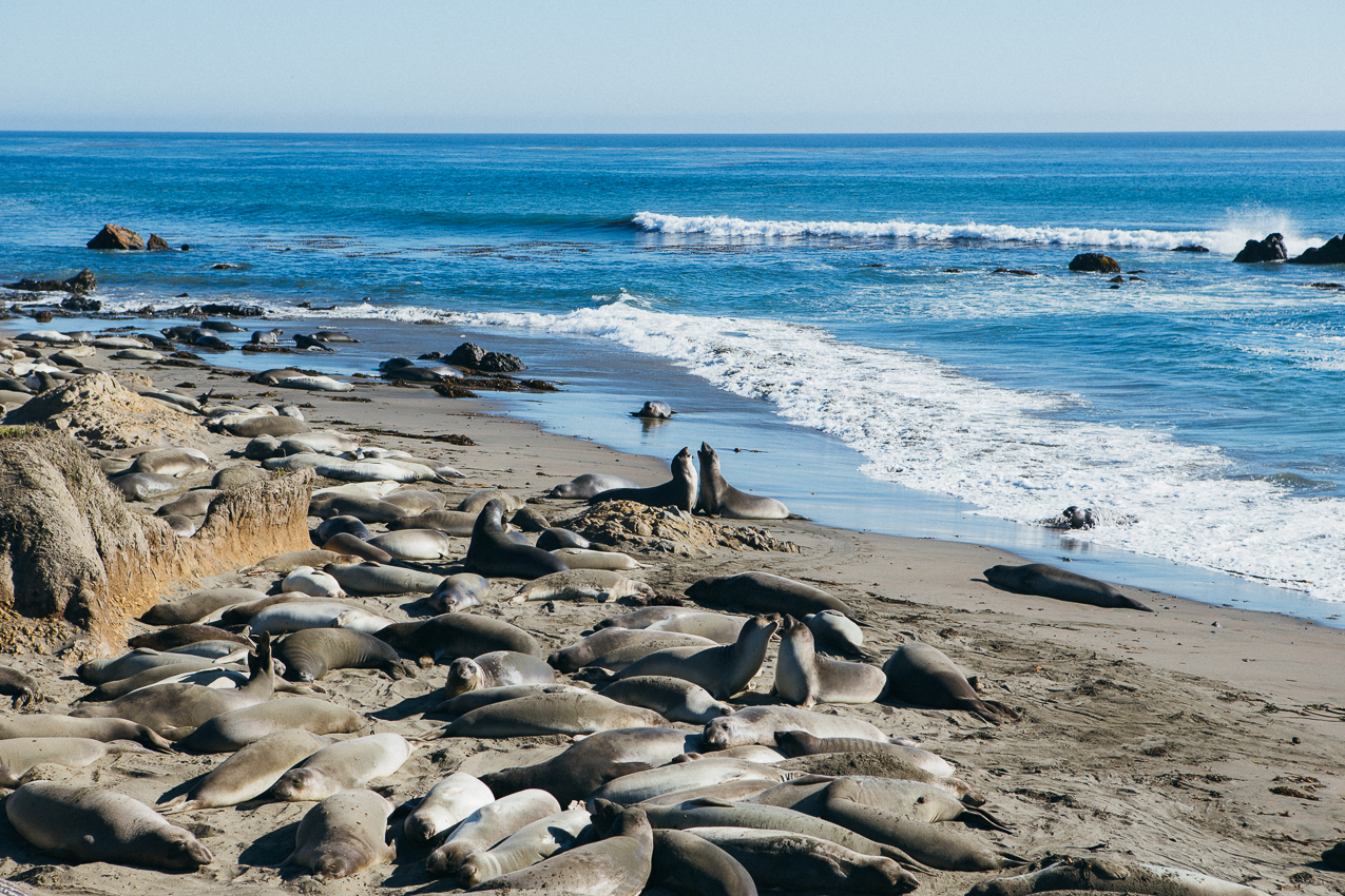 The sea lions have some heavy turf wars going on.