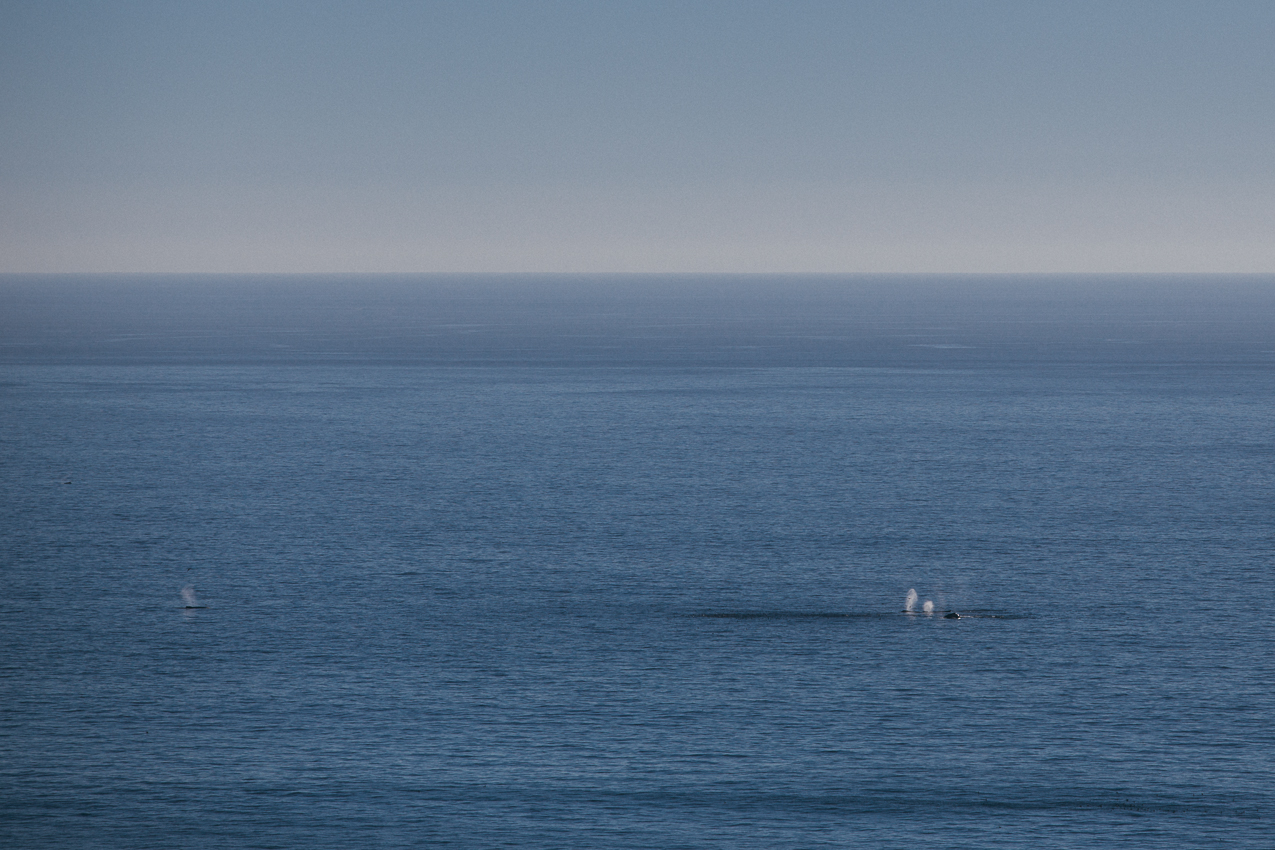Having a whale of good time on this stretch.