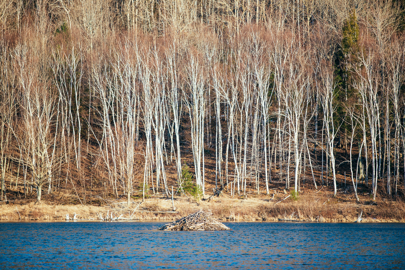 Beaver Island Lodge has rooms available.