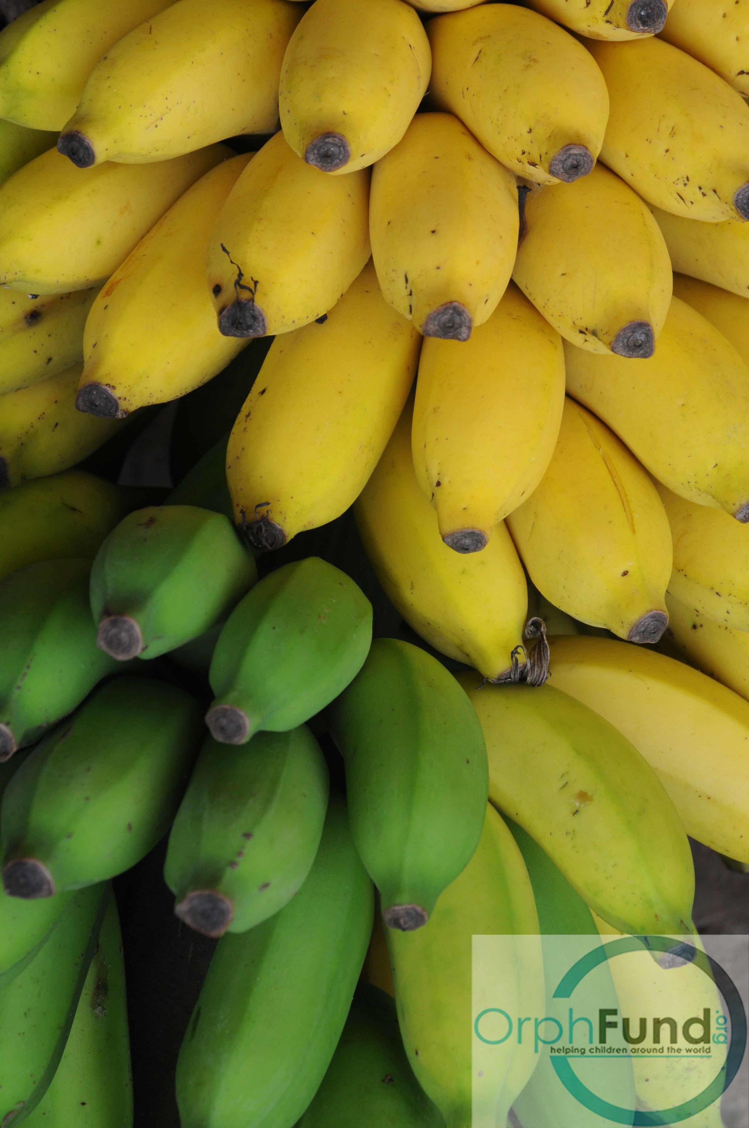 17 bananas copy.jpg