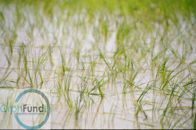 rice copy.jpg
