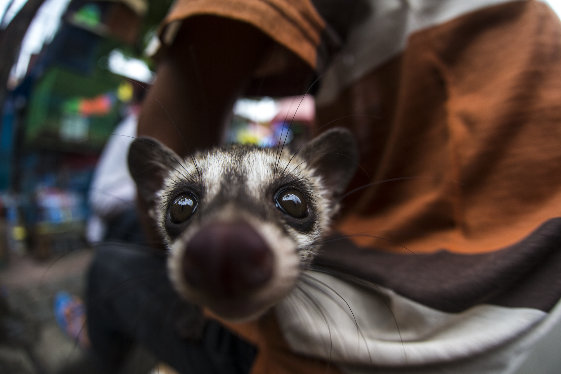 A market trader showcased each of his 'products' by taking them out of their cages and holding them, showing them off to potential buyers. Species such as this palm civet were for sale.