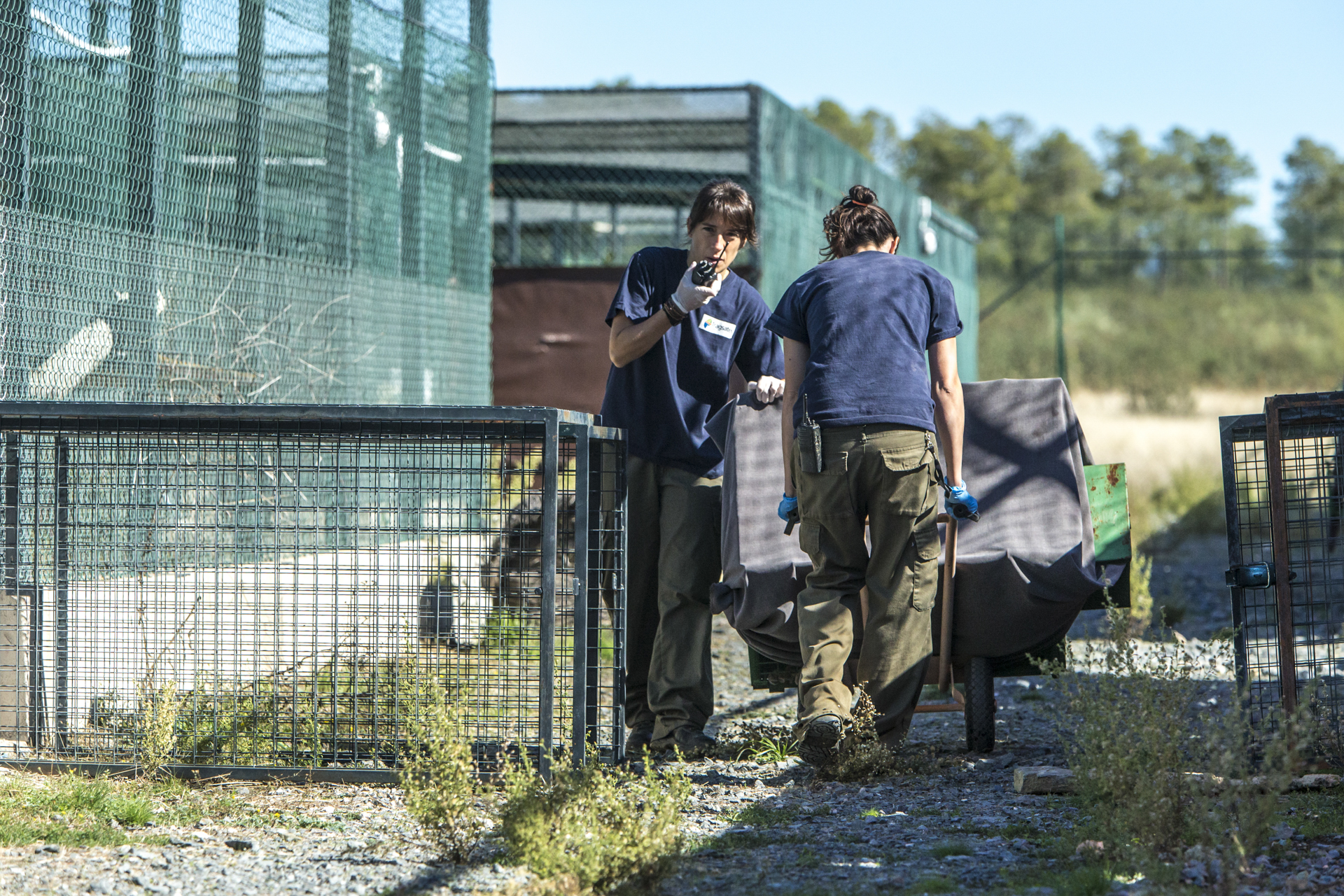 The breeding facilities are incredibly secure, here a lynx is moved between enclosures by workers.