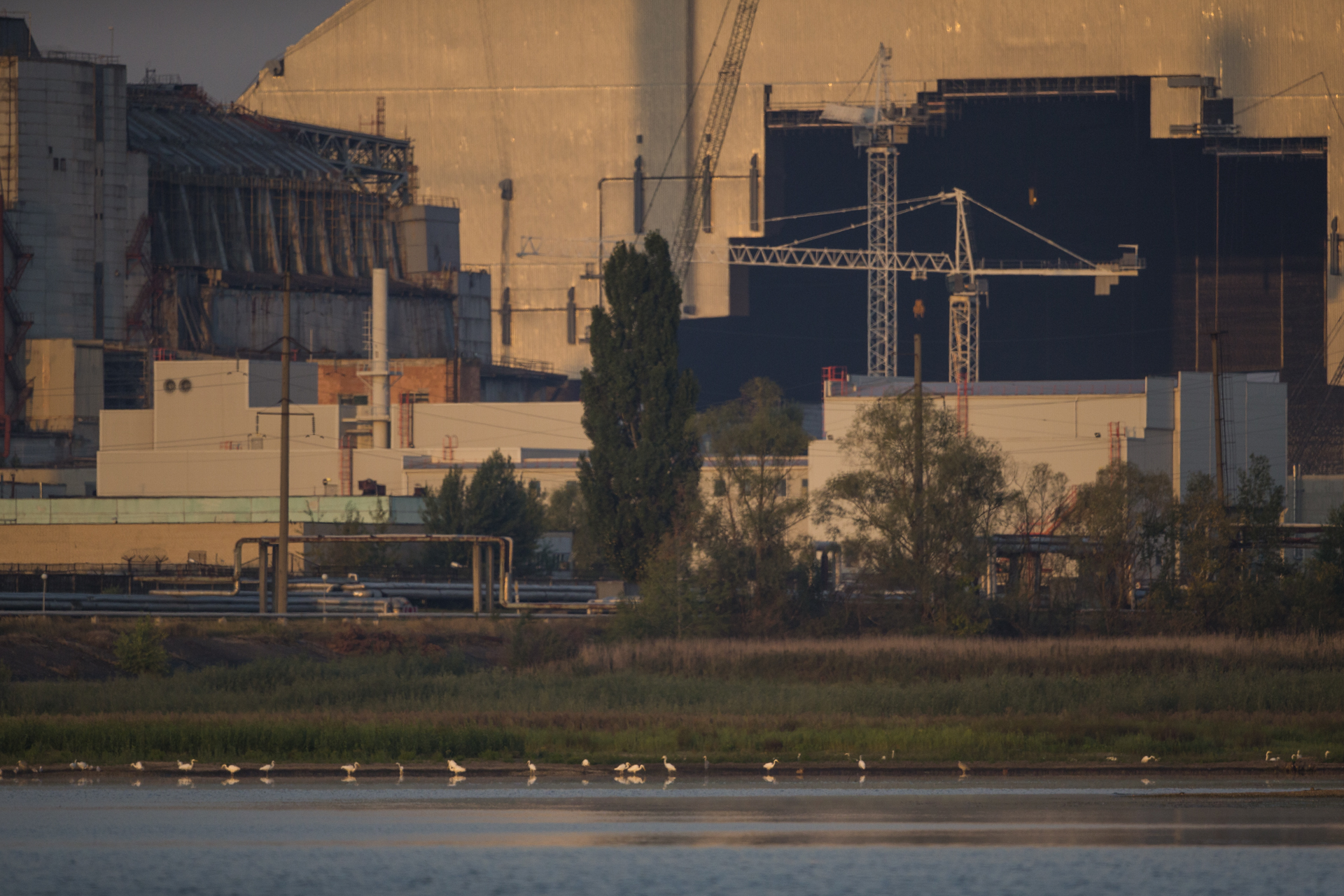 The cooling ponds in the shadow of the reactor are home to healthy populations of fish and amphibians attracting vast flocks of water birds.