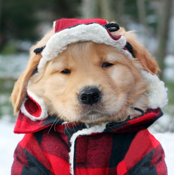 puppyinacoat1864.jpg