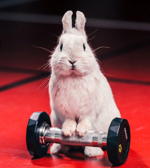 weightliftingbunny1864.jpg