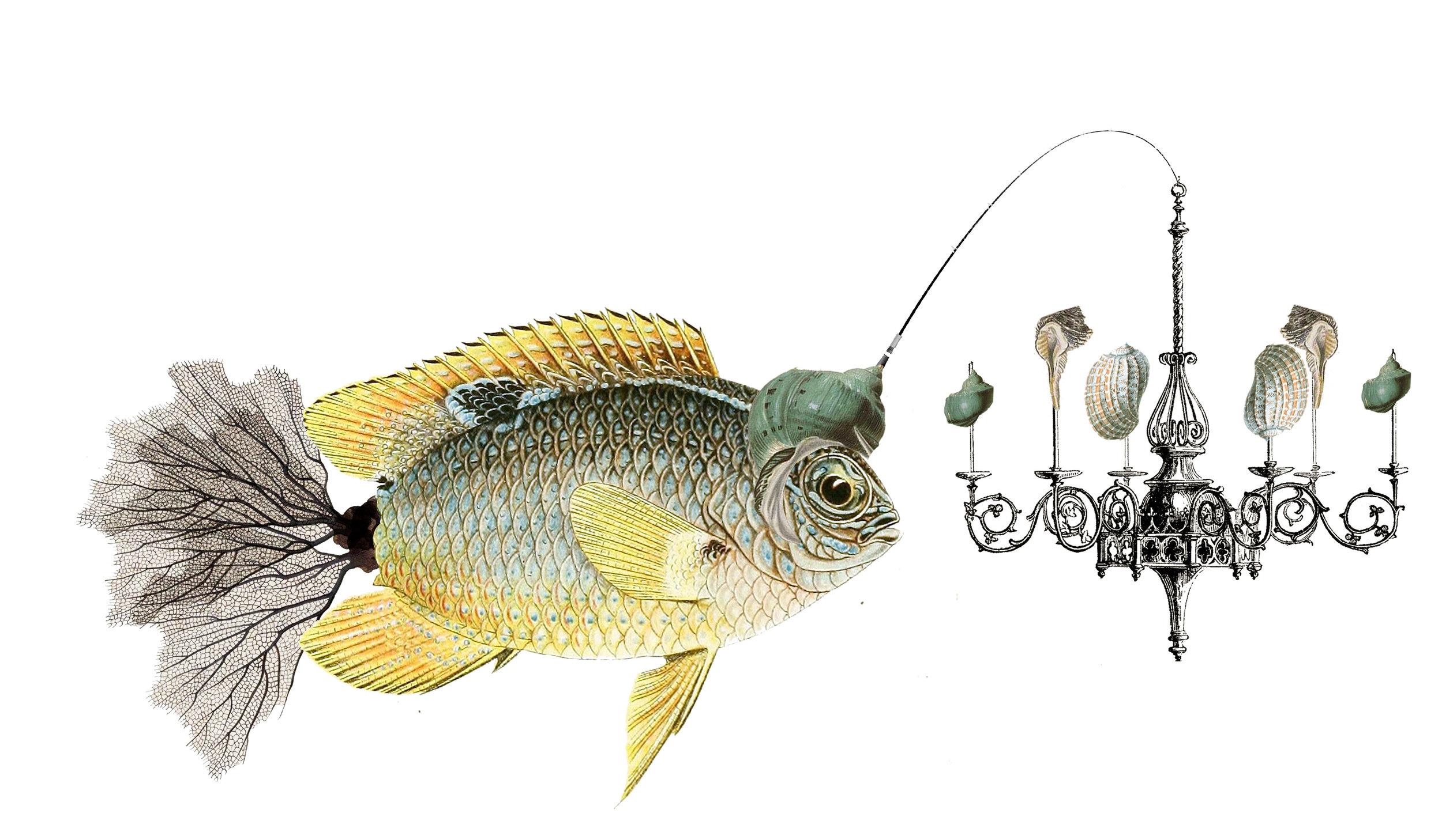 Lampy Fish.jpg