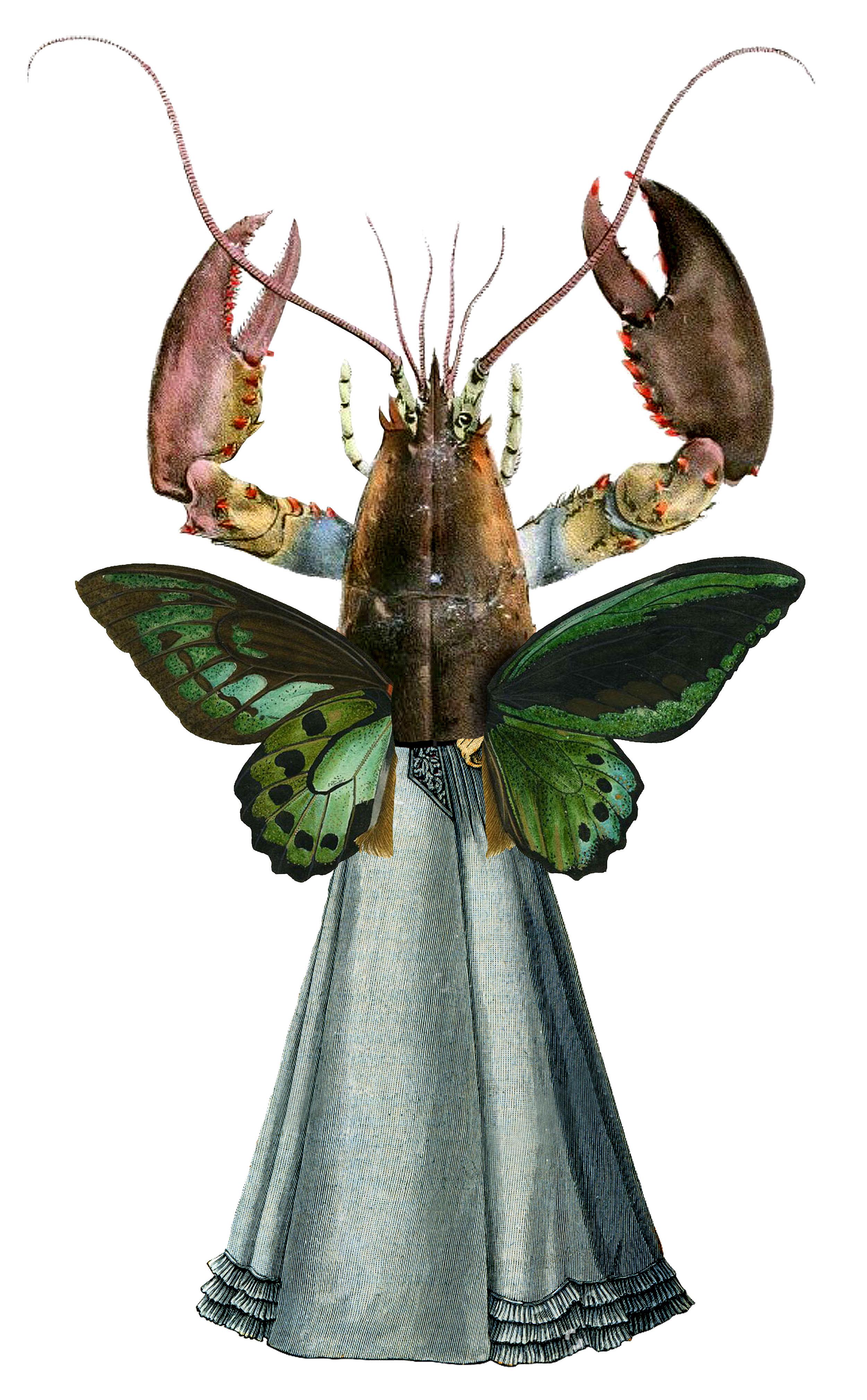 Lobster_web.jpg