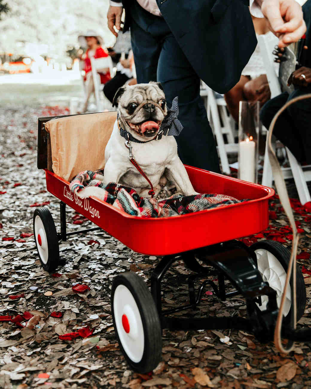 joe-tim-wedding-dog-wagon-0808-1018_vert.jpg