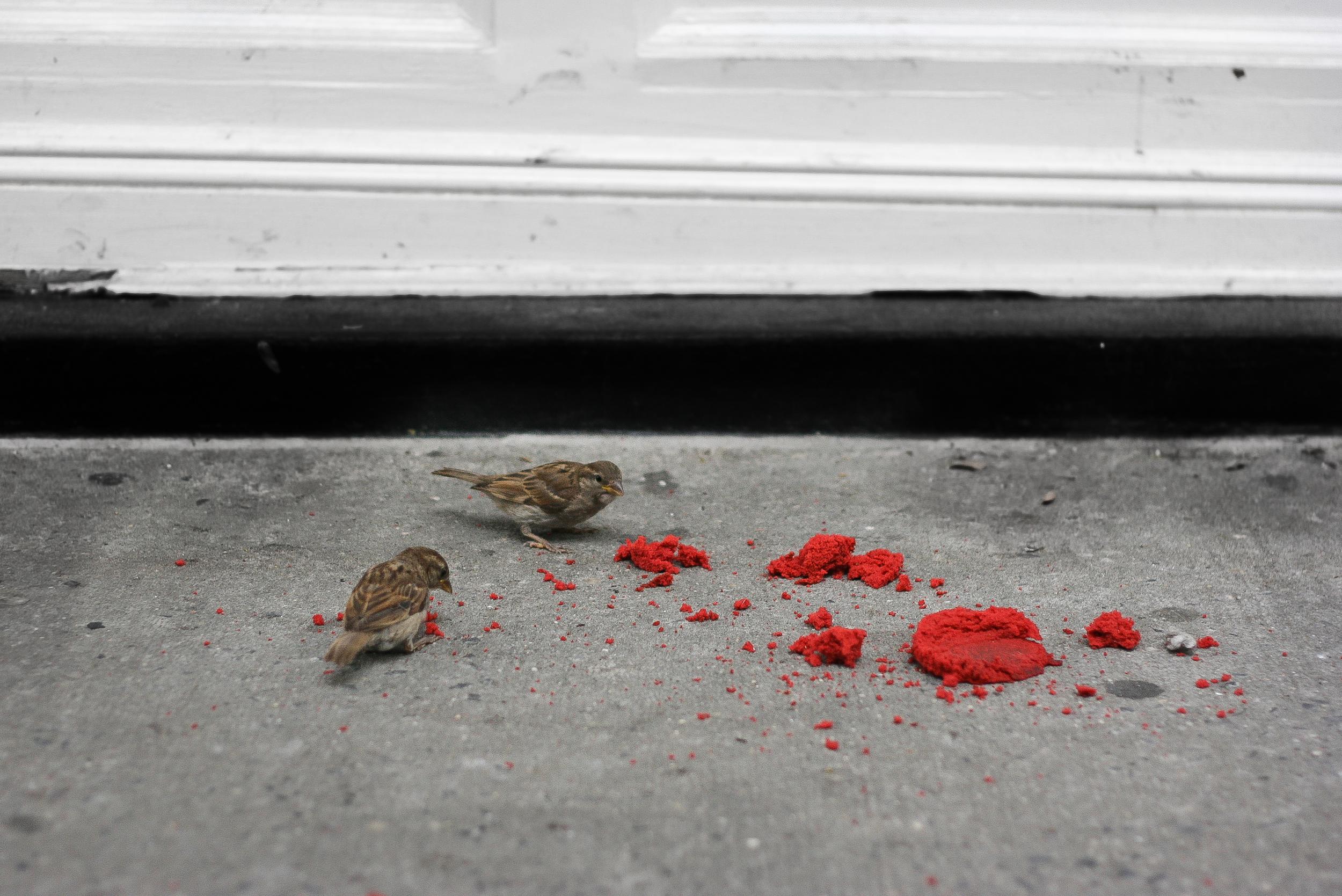 Red velvet for the birds, too.