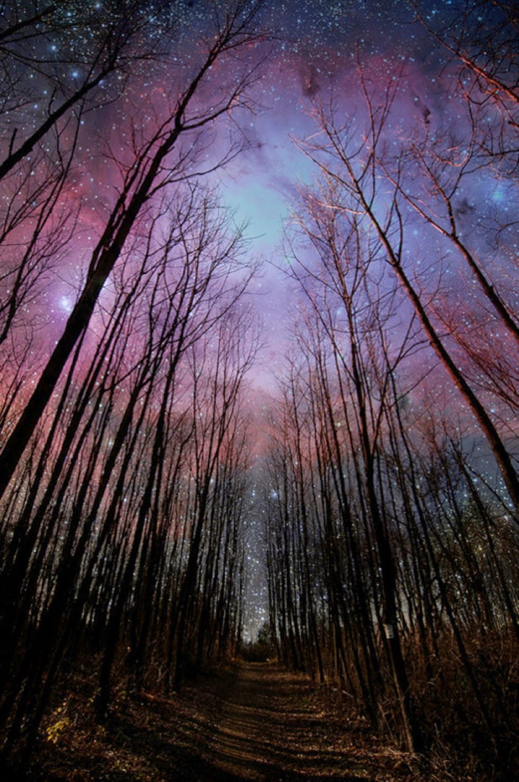 Stars through forest.jpg